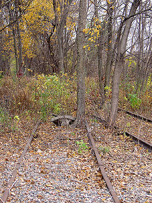 Trees growing in old train tracks