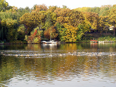 Geese on Lake Johanna  2 October