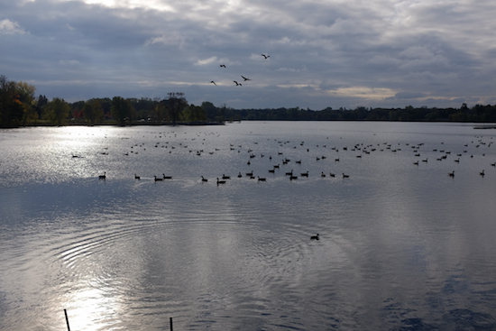 Autumn is setting in; wildfowl on Como Lake